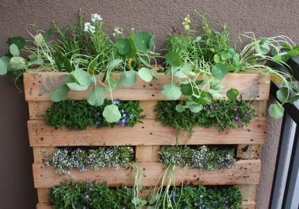 Landscaping on a Budget Pallet Garden